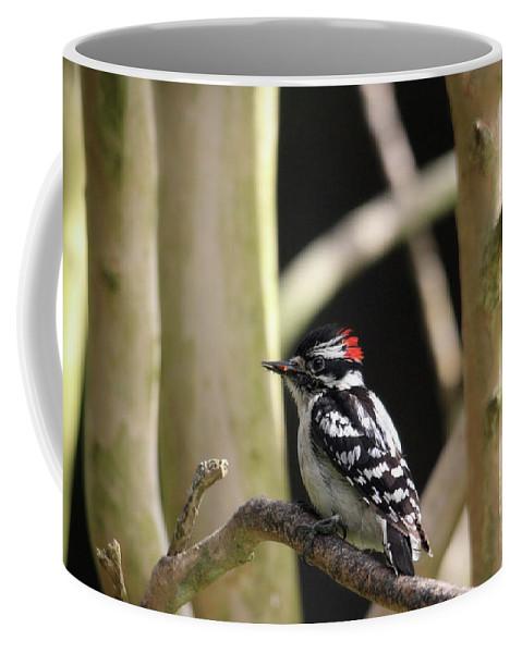 Birds Coffee Mug featuring the photograph Downy Woodpecker by Trina Ansel