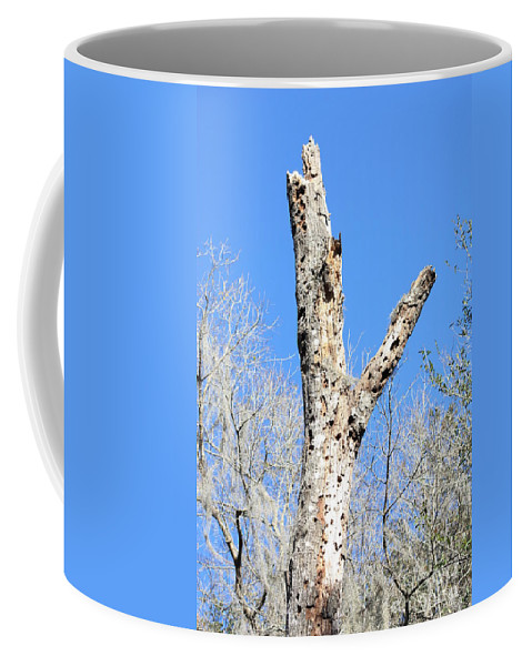 Old Tree Coffee Mug featuring the photograph Woodpecker was Here by Carol Groenen