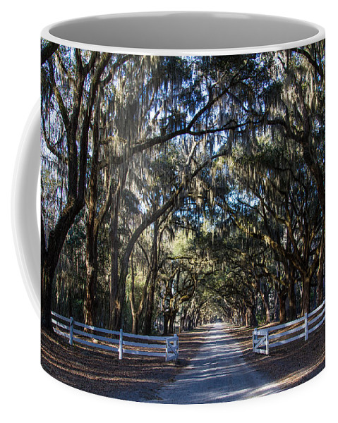 Georgia Coffee Mug featuring the photograph Wormsloe Avenue #2 by Robert J Caputo