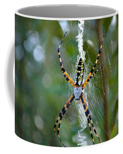 Spide Coffee Mug featuring the photograph Writing Without Spellcheck by Kenneth Albin