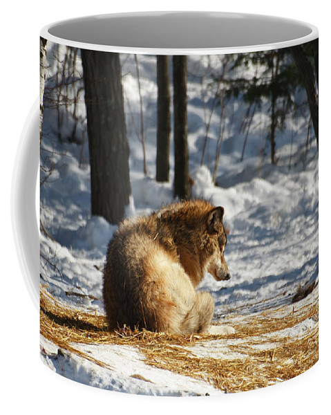Wolf Coffee Mug featuring the photograph Yearling Wolf In The Snow by Kira Hagen