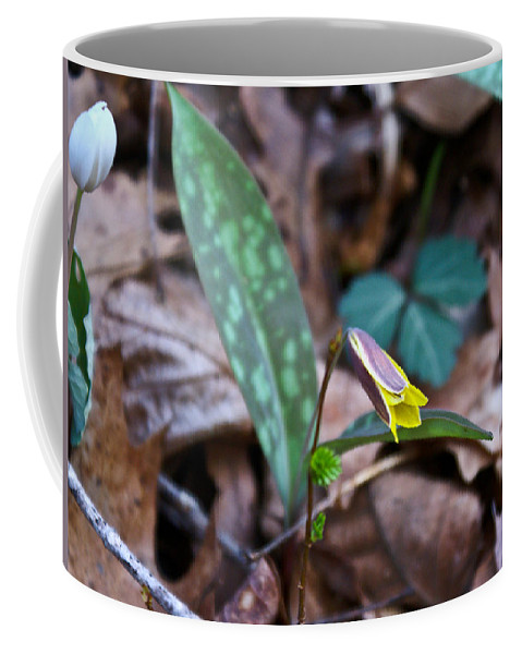 Yellow Coffee Mug featuring the photograph Yelllow Trout Lily 1 by Douglas Barnett