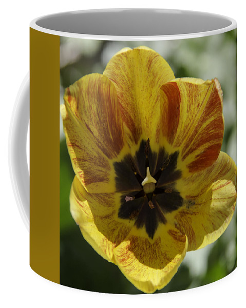 Flowers Coffee Mug featuring the photograph Yellow And Red Tulip Center Squared by Teresa Mucha