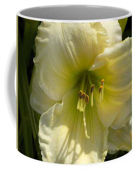 Daylily Coffee Mug featuring the photograph Yellow And White Daylily by William Tasker