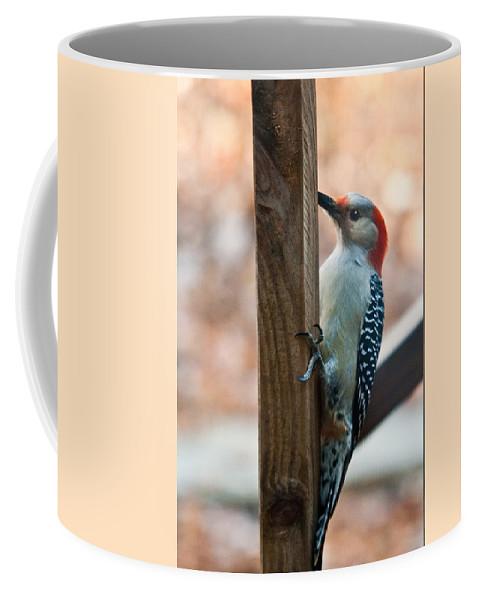 Cumberand Coffee Mug featuring the photograph Yellow Bellied Sapsucker by Douglas Barnett