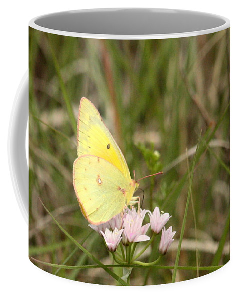 Nature Coffee Mug featuring the photograph Clouded Sulphur Butterfly In Field by Sheila Brown