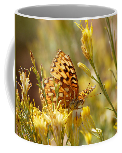 Butterfly Coffee Mug featuring the photograph Yellow Butterfly by Marcia Socolik