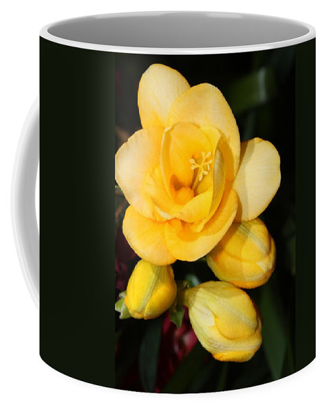 Easter Coffee Mug featuring the photograph Yellow Crocus Closeup by Carol Groenen