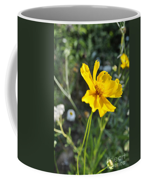 Coreopsis Photograph Coffee Mug featuring the photograph Yellow Cup by Penny Neimiller