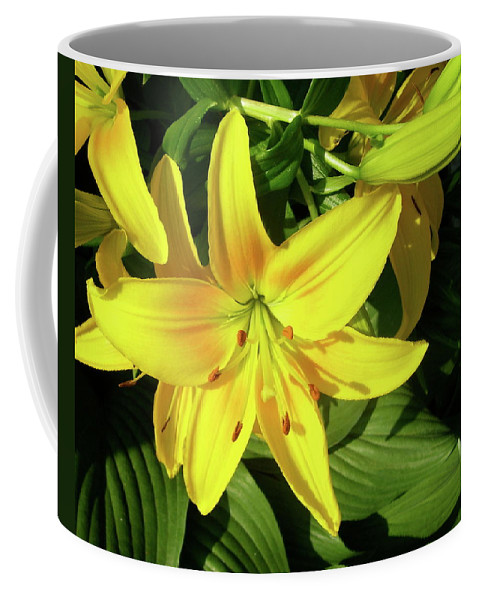 Day Lily Coffee Mug featuring the photograph Yellow Day Lilies by Michael Peychich