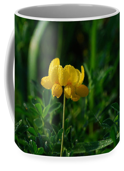 Birds Foot Trefoil Coffee Mug featuring the photograph Yellow Dew Drops by Michelle Hastings