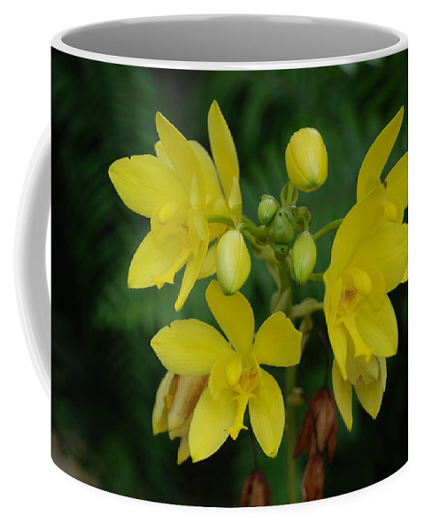 Macro Coffee Mug featuring the photograph Yellow Flower by Rob Hans