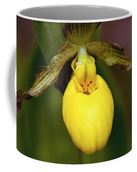 Beautiful Coffee Mug featuring the photograph Yellow Lady's Slipper 3 by Jack R Perry