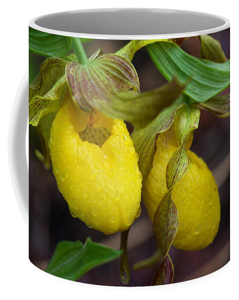 Beautiful Coffee Mug featuring the photograph Yellow Lady's Slipper by Jack R Perry
