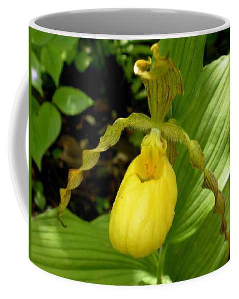 Orchid Coffee Mug featuring the photograph Yellow Lady's Slipper by Nelson Strong