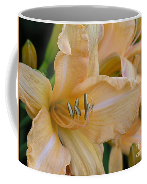 Yellow Coffee Mug featuring the photograph Yellow Lilly by Diane Greco-Lesser