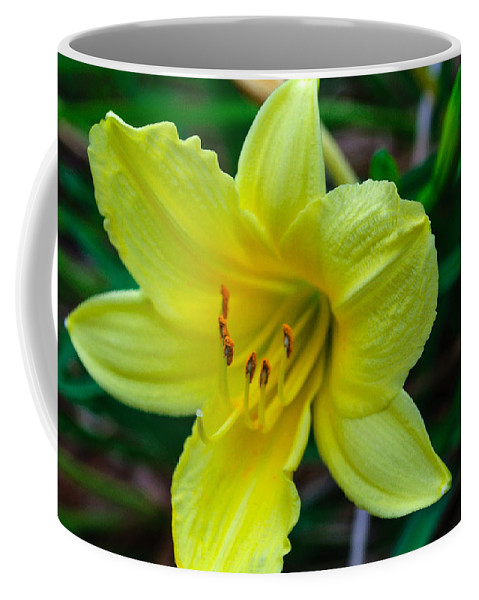 Yellow Coffee Mug featuring the photograph Yellow Lily by Tikvah's Hope