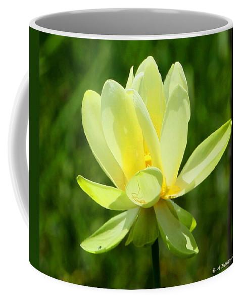Yellow Lotus Coffee Mug featuring the photograph Yellow Lotus by Barbara Bowen