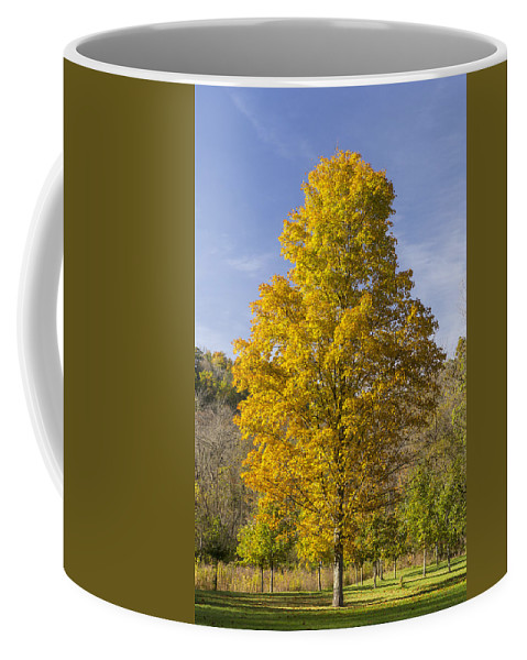 Tree Coffee Mug featuring the photograph Yellow Maple Tree 1 by John Brueske