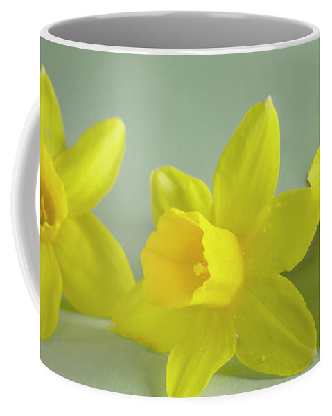 Yellow Mini Narcissus Coffee Mug featuring the photograph Yellow Mini Narcissus by Iris Richardson