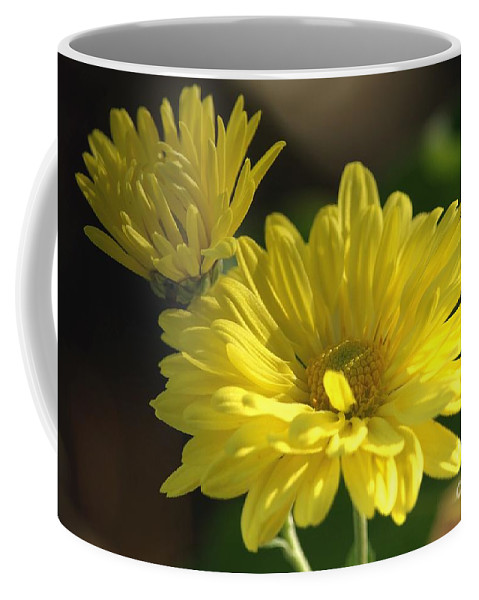 Chrysthanthemums Coffee Mug featuring the photograph Yellow Mums by Sharon Talson