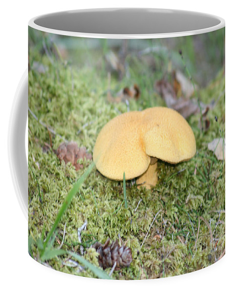 Mushrooms Nature Plants Wild Moss Acorns Forest Coffee Mug featuring the photograph Yellow Mushroom by Andrea Lawrence