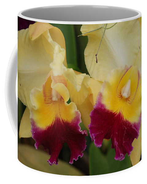 Macro Coffee Mug featuring the photograph Yellow Purple Orchids by Rob Hans