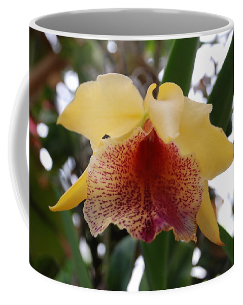 Macro Coffee Mug featuring the photograph Yellow Red Orchid by Rob Hans