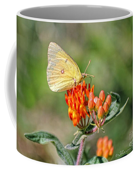 Butterfly Coffee Mug featuring the photograph Yellow Sulphur Butterfly by Sharon Woerner