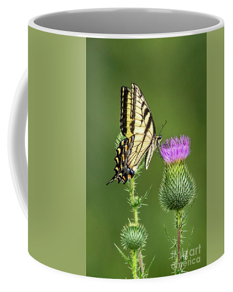 Butterfly Coffee Mug featuring the photograph Yellow Swallow Tail by Todd Bielby