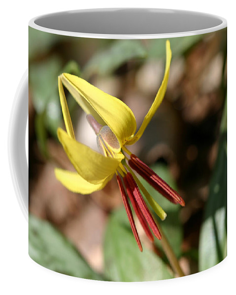 Americanum Coffee Mug featuring the photograph Yellow Trout Lily by Jack R Perry