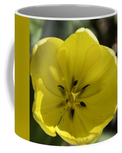 Flowers Coffee Mug featuring the photograph Yellow Tulip Center Squared by Teresa Mucha