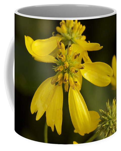Wing Coffee Mug featuring the photograph Yellow Wingstem by Jack R Perry