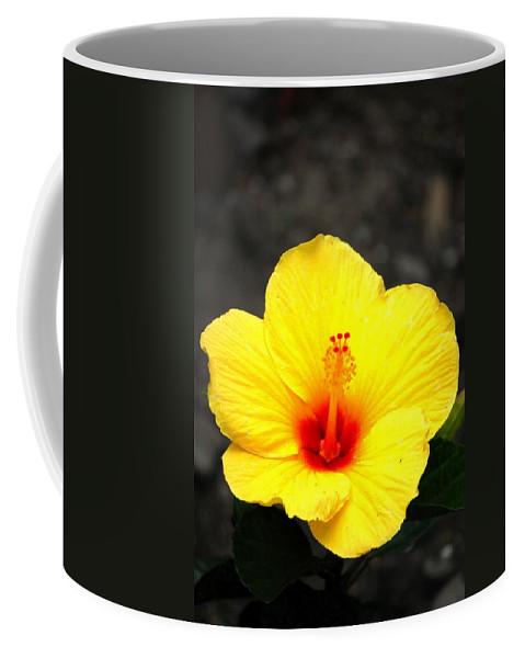 Digital Photo Coffee Mug featuring the photograph Yellow Wonder by David Lane