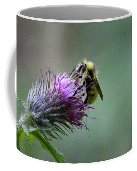 Adventure Coffee Mug featuring the photograph Yellowhead Bumblebee Two by Nicholas Miller