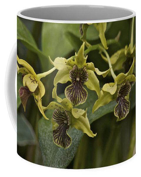 Orange Coffee Mug featuring the photograph Yellowish Orchids by Michael Peychich