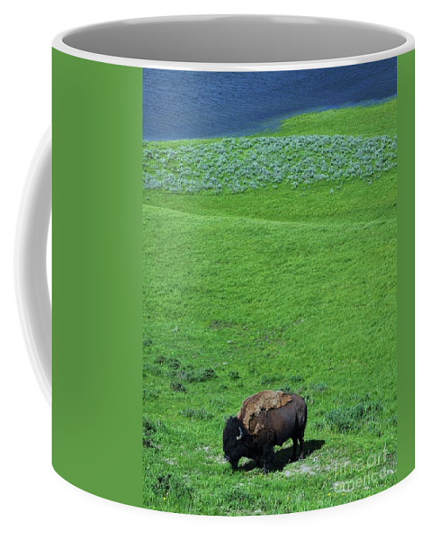 Yellowstone Bison Coffee Mug featuring the photograph Yellowstone Bison by Allen Beatty