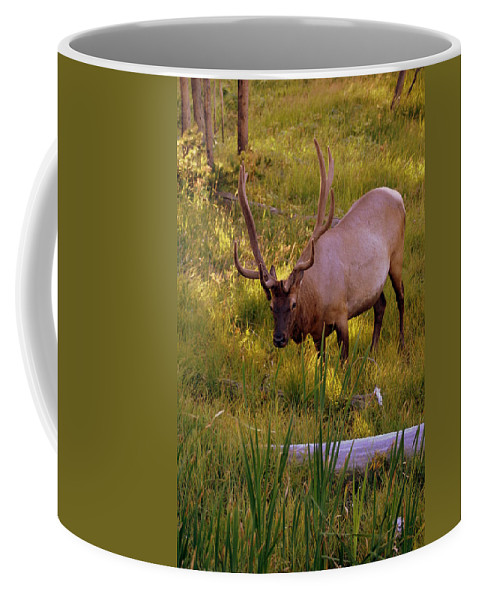 Elk Coffee Mug featuring the photograph Yellowstone Bull by Marty Koch