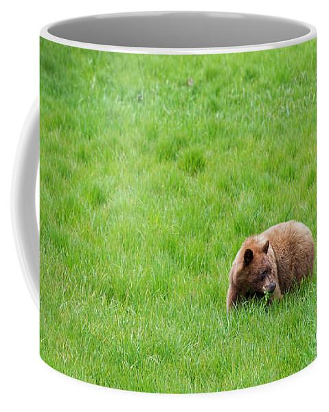 Bear Coffee Mug featuring the photograph Yosemite Bear by David Arment