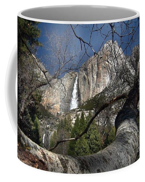 California Scenes Coffee Mug featuring the photograph Yosemite Falls Tree by Norman Andrus