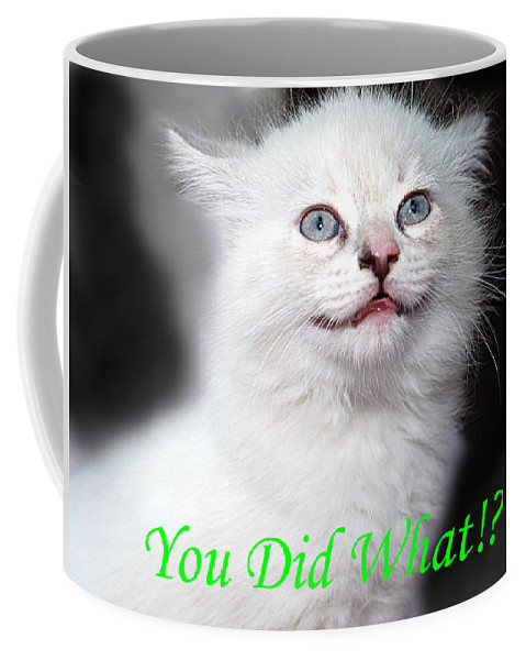 Funny Coffee Mug featuring the photograph You Did What Greeting Card by Bob Johnson