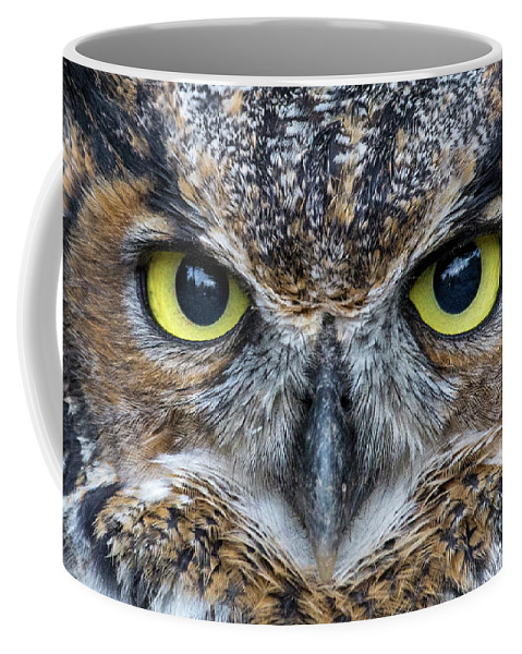 Bird Coffee Mug featuring the photograph You Look Tasty by Brent L Ander