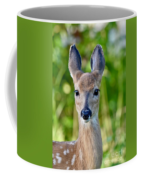Deer Coffee Mug featuring the photograph Young And Pretty by Jeramey Lende