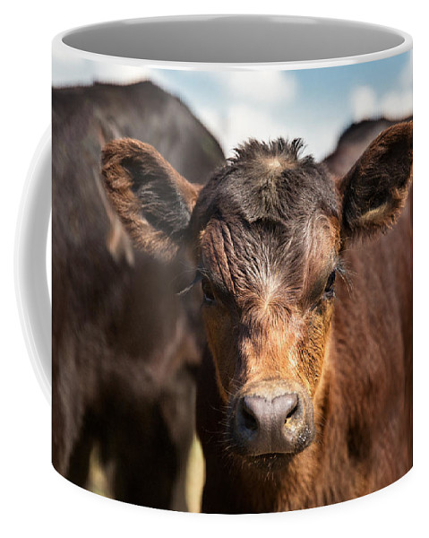 Young Coffee Mug featuring the photograph Young Angus by Todd Klassy