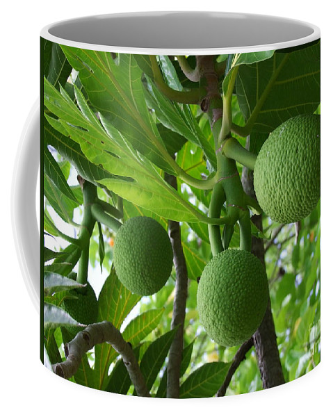Breadfruit Coffee Mug featuring the photograph Young Breadfruit by Mary Deal
