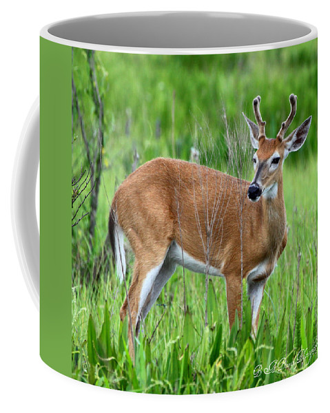 White Tail Deer Coffee Mug featuring the photograph Young Buck by Barbara Bowen