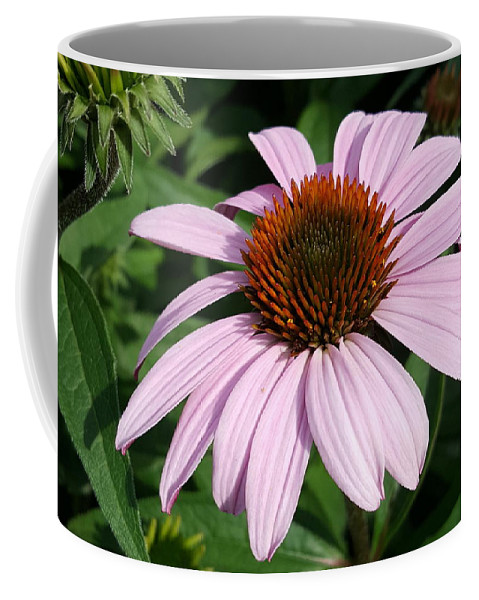Purple Coffee Mug featuring the photograph Young Echinacea Bloom by Tammy Finnegan