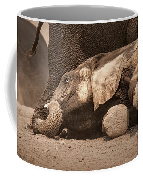 Elephant Coffee Mug featuring the photograph Young Elephant Lying Down by Johan Swanepoel