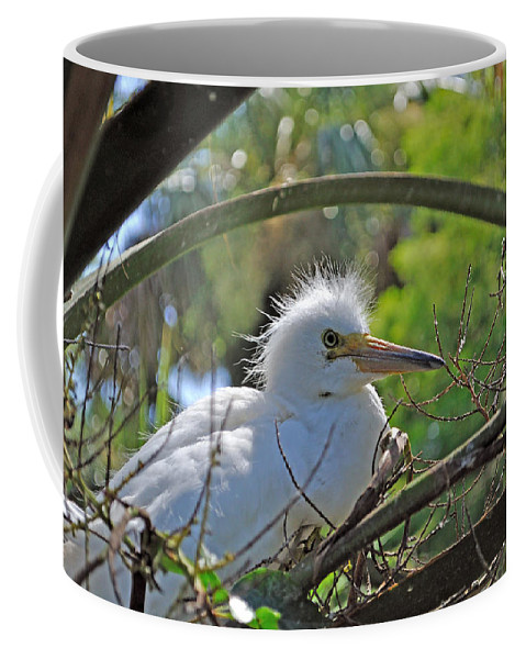 Egret Coffee Mug featuring the photograph Young Great Egret by Kenneth Albin