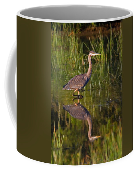 Great Blue Heron Coffee Mug featuring the photograph Young Heron by Randall Ingalls